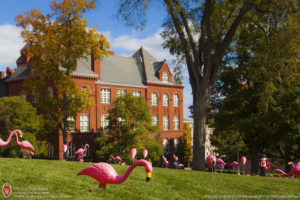 flamingos, UW-Madison, Bascom Hill, Science Hall, University of Wisconsin